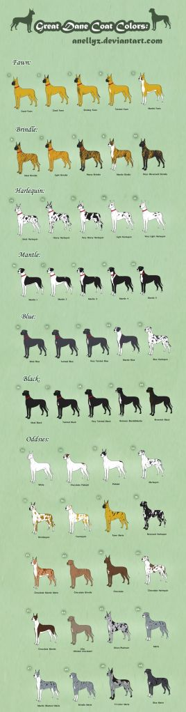 Great Dane Colours