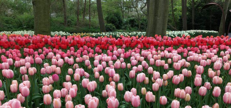 cropped-cropped-keukenhof-amsterdam-netherlands-flowers-5.jpg