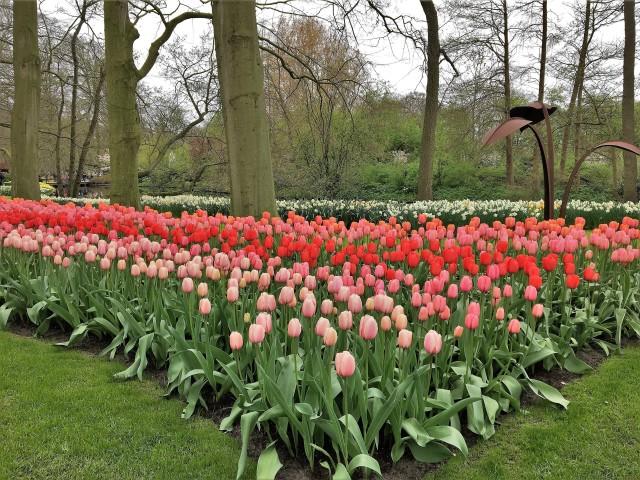 Keukenhof Amsterdam Netherlands Flowers 4