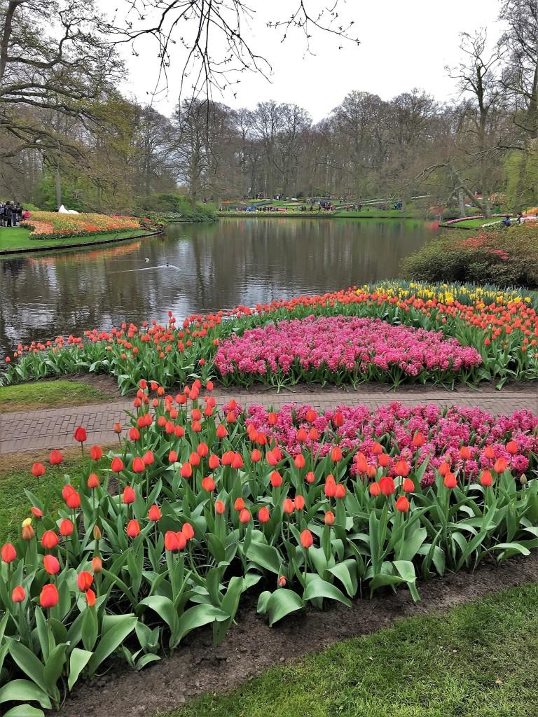 Keukenhof Amsterdam Netherlands Flowers 6