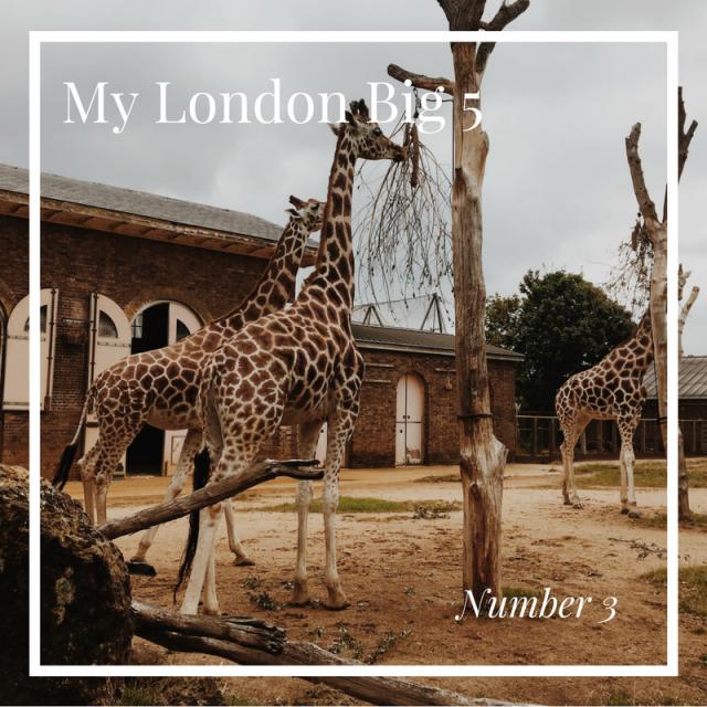 My London Big 5 ZSL London Zoo