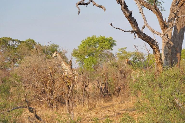 Hwange National Park Zimbabwe Travel Safari