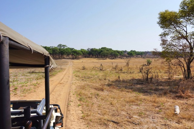 Zimbabwe Travel Hwange National Park