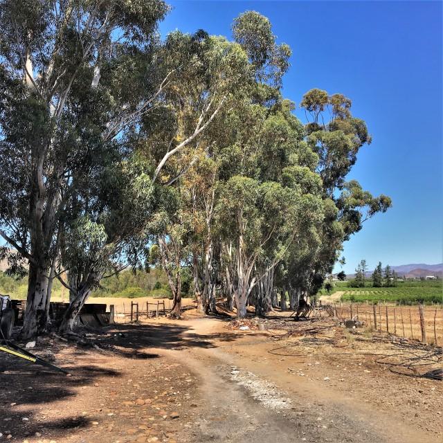 Ladismith South Africa Travel